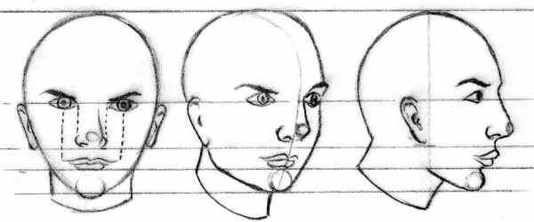 La tête, de face, trois-quart et profil
